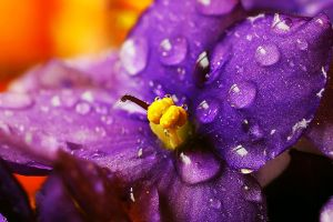 Colourful Flower by stofo