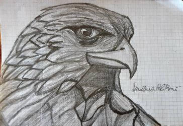Drawing realistic eagle by Demy by Demy111