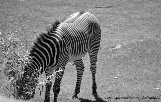 Stripes by Juwelstone