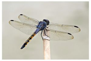 Dragonfly 16 by kiew1