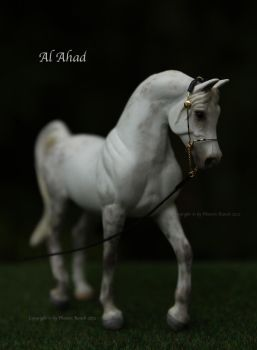 Al Ahad, Breyer Stablemate Arabian Stallion by PhoenixRanch