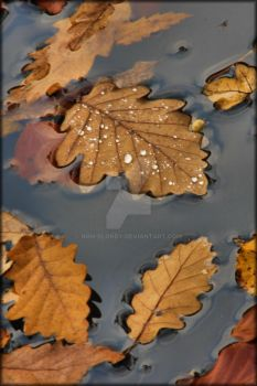 leaves 2 by non-blondy