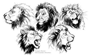 Lion Studies 10-7 by teagangavet