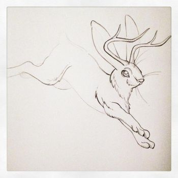 Jackalope Sketch by PinkBunnie