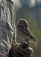Owl Stock 02 by NellyGraceNG