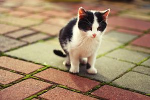 Little cat 4. by shadddow