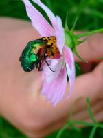 beetle on... by gold-paroles