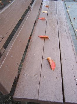 Leaves on a Bench by EbbtideCheque