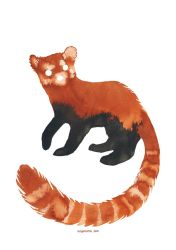 Ink Red panda by Myrntai
