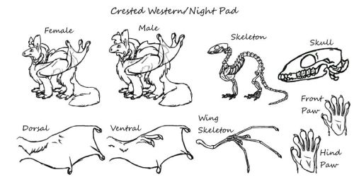 Crested Western/Night Pad_old 2 by Dragimal