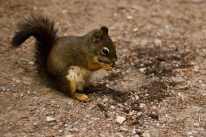 Squirrel Lunch by ChristophMaier