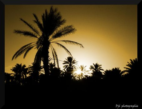 Sunset on the palm grove by Dje38