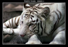 White Tiger Series 1, pic 2 by Mardonic