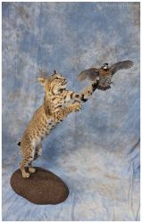 In-Flight Meal (Cat and Quail) v2 by WeirdCityTaxidermy