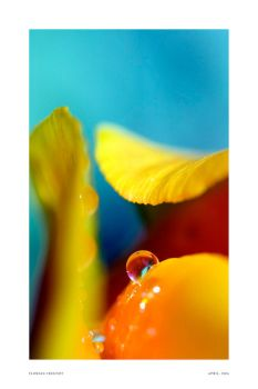 resting in a tulip by hermik