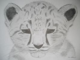 Snow Leopard by Twillight-lover