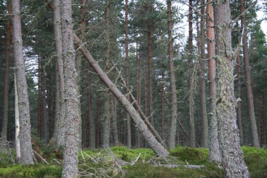 The fallen Trees by Cora-Leigh