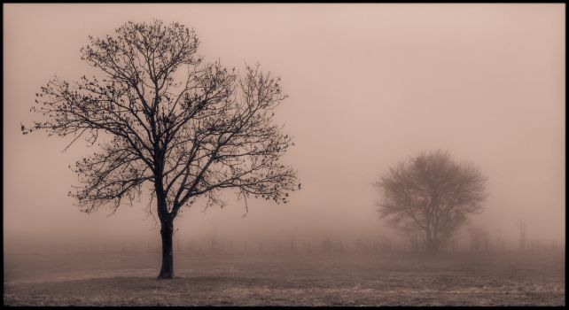 Black Fog by WTek79