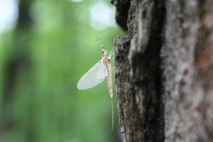 Insect on a tree by Ph0Xy