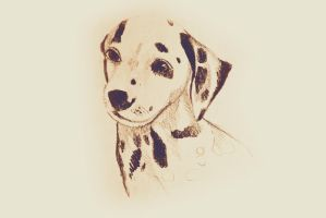 Drawing of dalmatian dog. Illustration by oanaunciuleanu