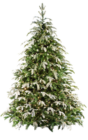 Xmas tree png 17 by iamszissz