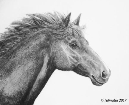 Charcoal horse by Tulinatur
