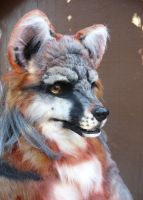 gray fox close up by LilleahWest