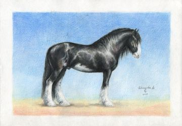 SHIRE horse by LittleMonster8