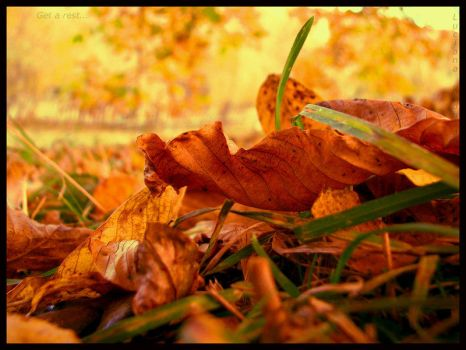Get a rest by Fall-Leaves-Club