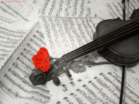 Still Life: Music and Nature by AddictedTunes