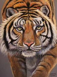 Turpentine Creek Tiger  2 by HouseofChabrier