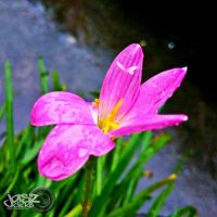 Flower In The Midst Of Rain by iamjasz