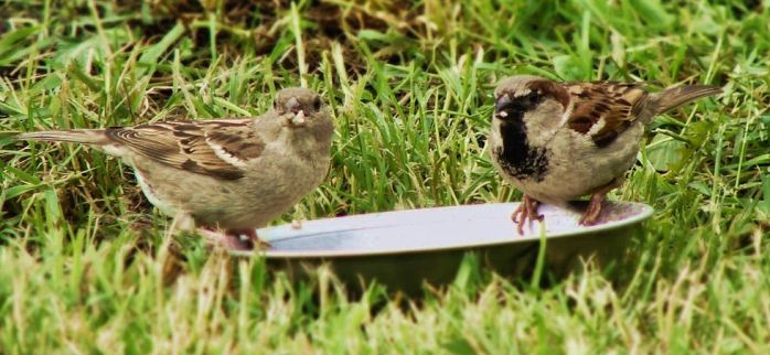 Sparrows by lumisateita