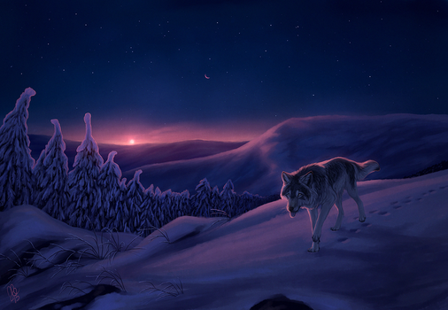 Polar night by kippycube