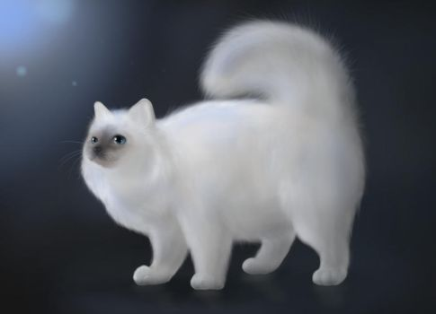 White Cat by Lizandre