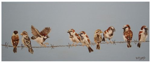 House Sparrows by Helenr251