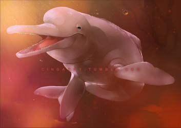 Amazonian River Dolphin by Cindacry