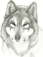 :Wolf: by katiecld