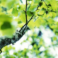 .: fresh birch :. by all17