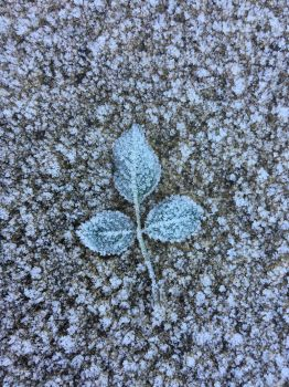 Three Leaves in the Frost by Makki-Summer