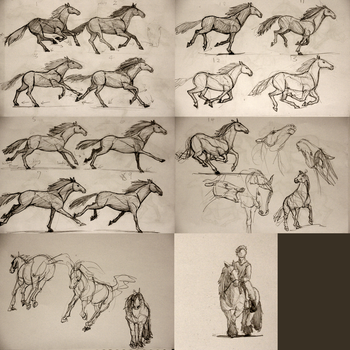Horse Study by CCCanyon
