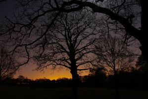 Night-time in the Country Park by BusterBrownBB