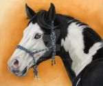 American Paint Horse - pastel by sschukina
