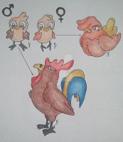 Chick, Hen, Rooster Pokemon