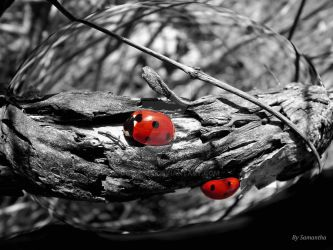 Exploring with Ladybirds by Cosmisia