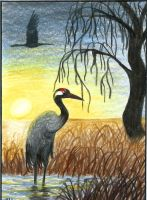 Evening sun (ACEO) by Woodswallow