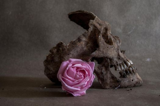 Death and Beauty by jeylina