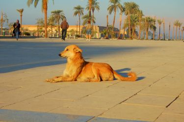 Karnak Temple 8 Sphinxy Dog by mynando
