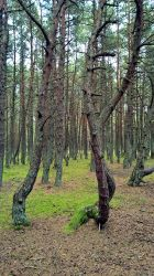 Curonian Spit :October: 4 by J-dono