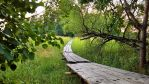 Trail to the island II by Pajunen